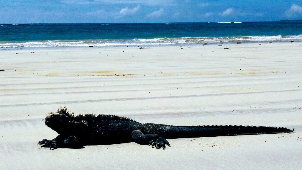 In Galapagos: Beach day in Isla Santa Cruz