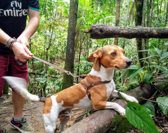 Discovering the lush forests of Penedo