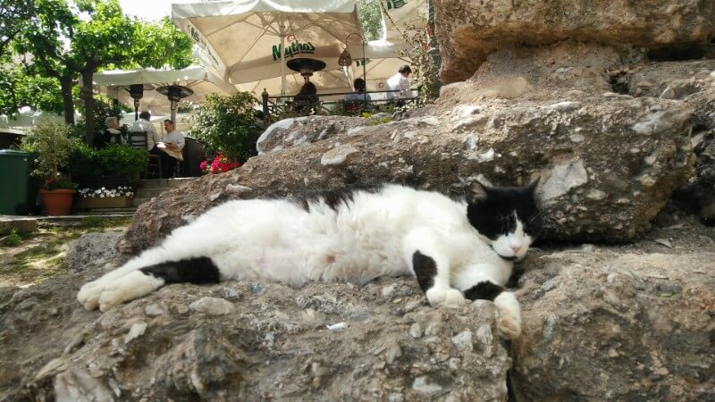 Greek cat napping