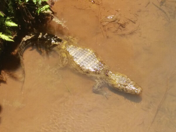Wildlife in Iguazu Falls
