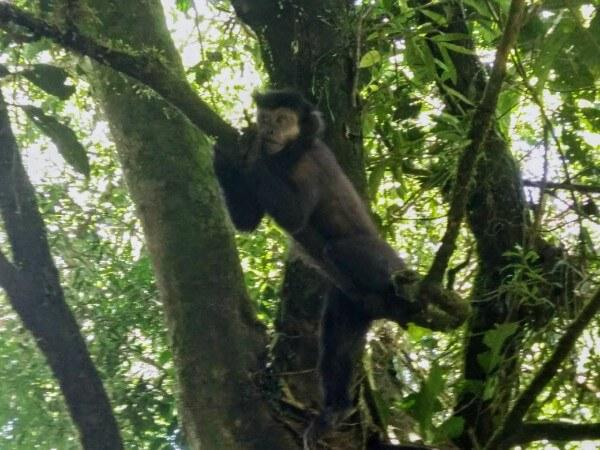 Monkey in Iguazu