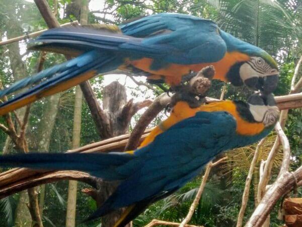 Aviary park in Iguazu