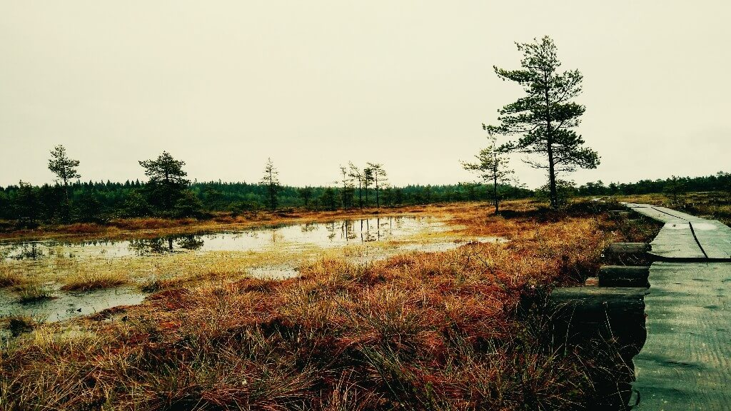 Day trip from Helsinki: Torronsuo swamp area