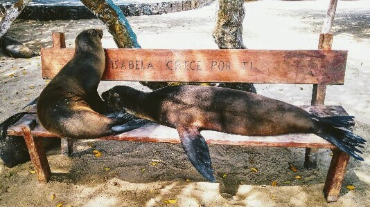 Sealions in Galapagos Islands